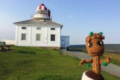 Newfoundland - Baby Groot - Sept 2017