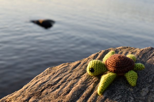 a small crochet sea turtle toy sitting on a rock beside the water in a lake